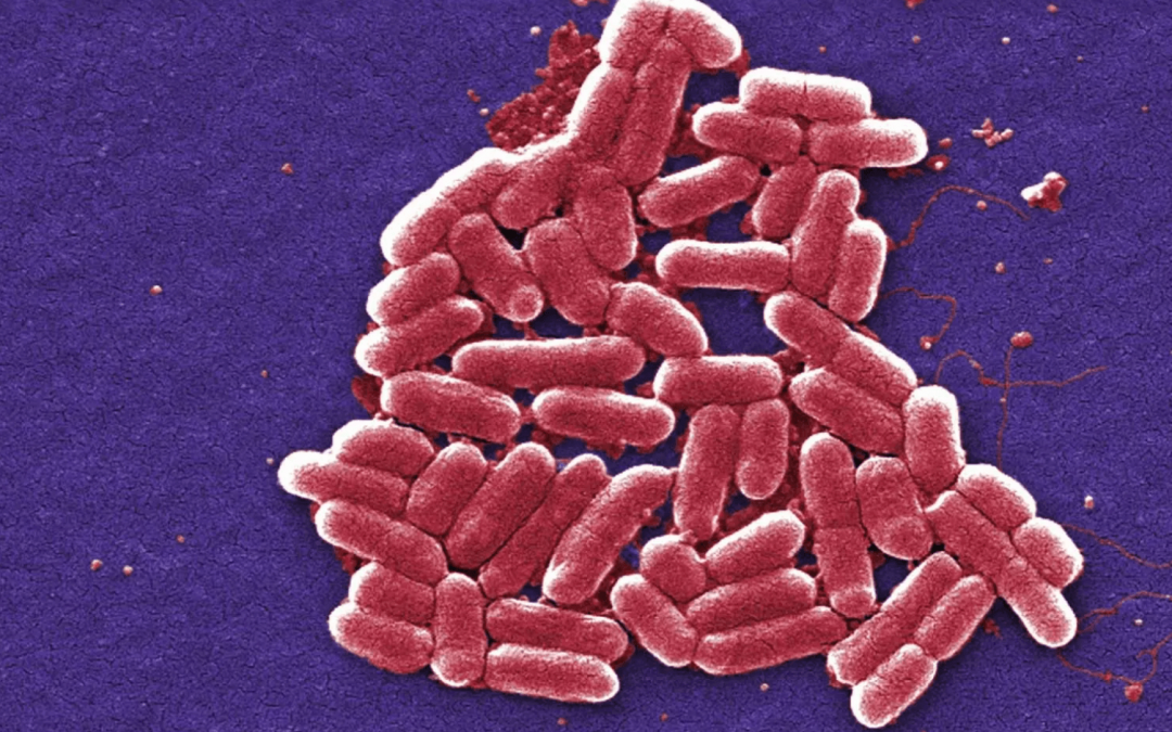 Why We Test For E. Coli